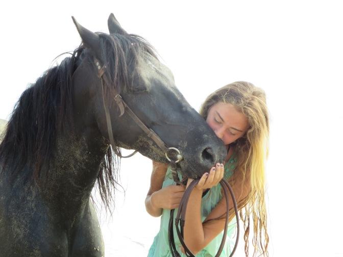 Unsere Arbeit mit den Pferden