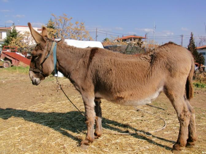 Pferdehändler in Griechenland