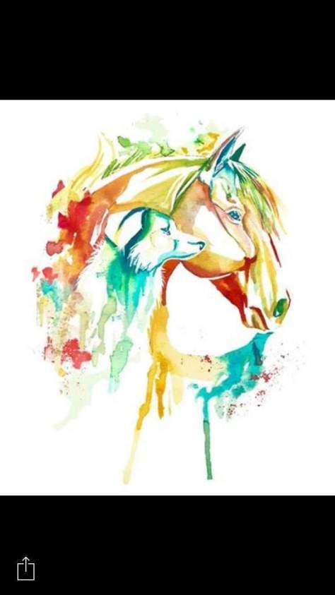 Animal Protection Chalkidki - Elpida - Horse Protection Chalkidki Greece - Horse rescue greece Chalkdiki - Dog Protektion Chalkidiki - Caroline Paulick - Tierschutz Griechenland - Tierschutz Chalkidiki 1 (7)
