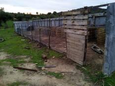 elpida-animal-protection-chalkidiki-horse-and-dogprotection-arravani-horses-arravani-breeding-1
