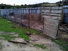 elpida-animal-protection-chalkidiki-horse-and-dogprotection-arravani-horses-arravani-breeding-2