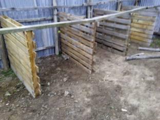 elpida-animal-protection-chalkidiki-horse-and-dogprotection-arravani-horses-arravani-breeding-5