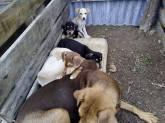 elpida-animal-protection-chalkidiki-horseprotection-dog-protection-arravani-horse-team-arravani-pferde-arravani-horse-arravani-zucht-2