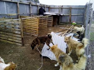 elpida-animal-protection-chalkidiki-horseprotection-dog-protection-arravani-horse-team-arravani-pferde-arravani-horse-arravani-zucht-3